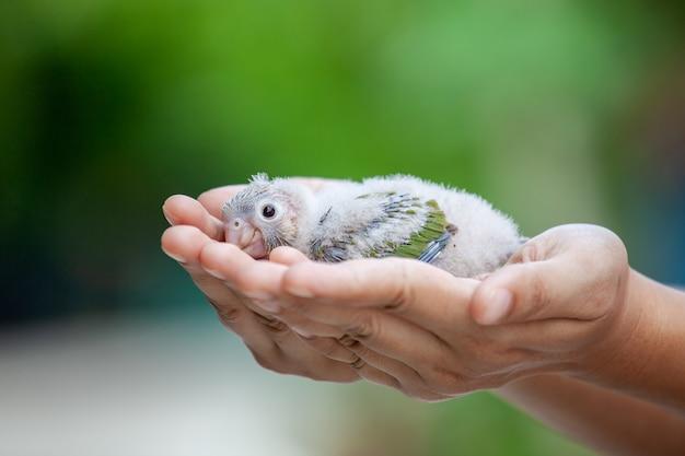 バッジー鳥を手に持った女性と優しくそれを世話します Premium写真
