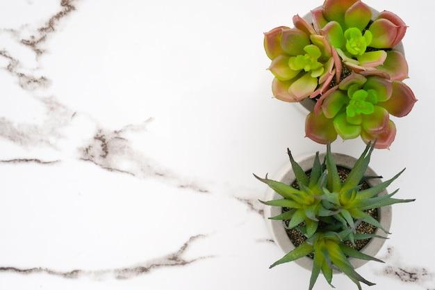 Сочные растения на фоне белого мрамора Premium Фотографии