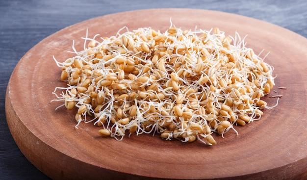 Куча проросшей пшеницы на коричневой деревянной доске, конец вверх. Premium Фотографии