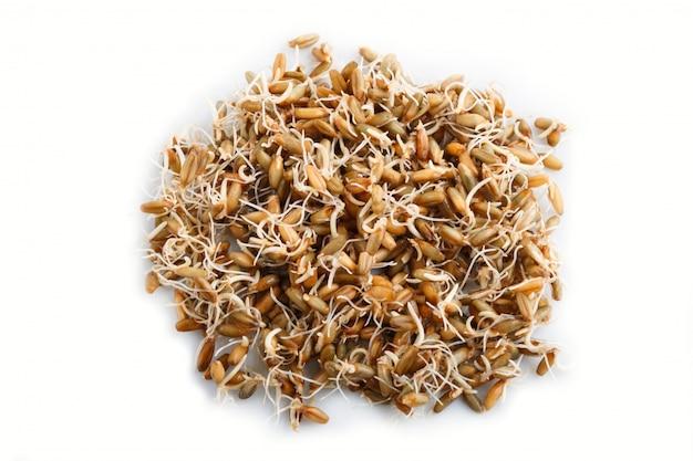 発芽ライ麦のヒープ、トップビュー。 Premium写真