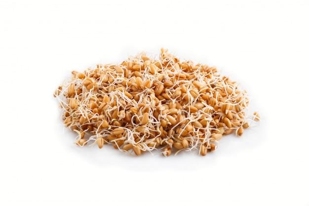 分離された発芽小麦のヒープ、サイドビュー。 Premium写真