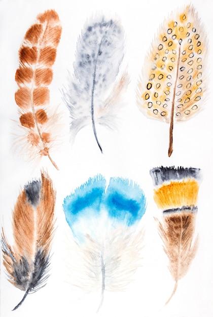 手描き水彩羽セット。白で隔離。 Premium写真