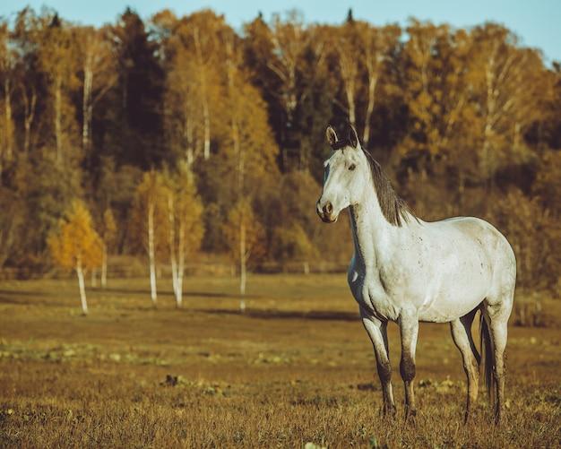 馬の歩行 無料写真