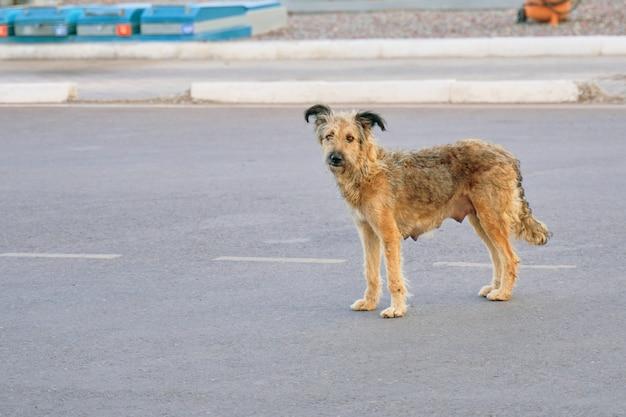 ホームレスの犬。 Premium写真