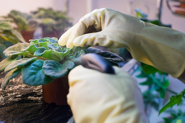 ハンドスプレー、害虫駆除、肥料工場で庭に植物を散布する。 Premium写真