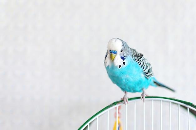 ケージの上に座って青い波状バギー Premium写真