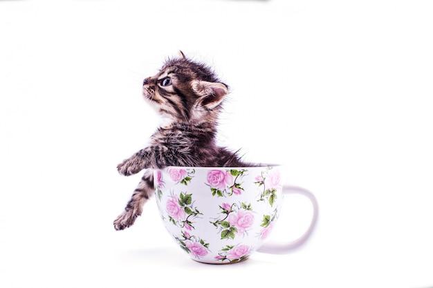 大きな白いカップに小さなトラ子猫 Premium写真