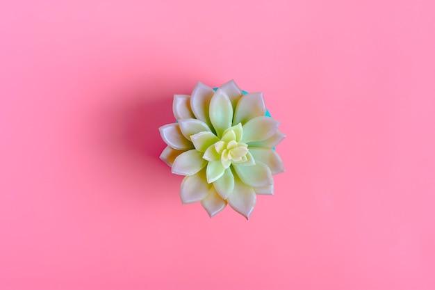 ピンク色の背景上に分離されて多肉植物の緑の花の美しいパターン Premium写真