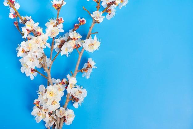 青い背景上の花とアプリコットの木の小枝 Premium写真