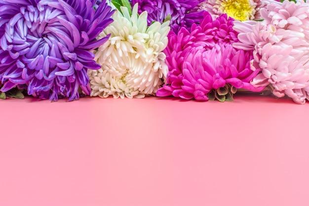 Красивые цветы астры на фоне пастельных розового цвета. плоская планировка, Premium Фотографии