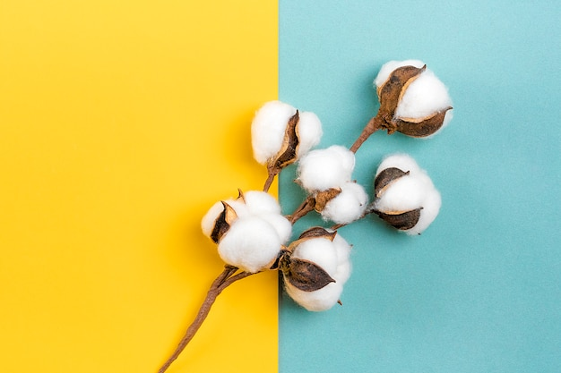 青と黄色の背景に熟した綿の小枝フラットレイアウトトップビューこんにちは秋コンセプト Premium写真