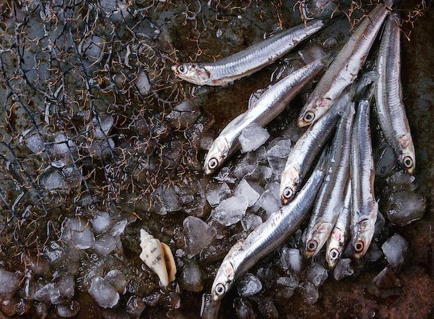 生の新鮮なアンチョビの魚 Premium写真