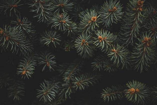クリスマスツリー、新年のテーマの背景にクリスマスフレーム。お使いのデバイスの壁紙 Premium写真