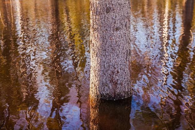 大きな水たまり、浸水区域の中心にある若い木 Premium写真