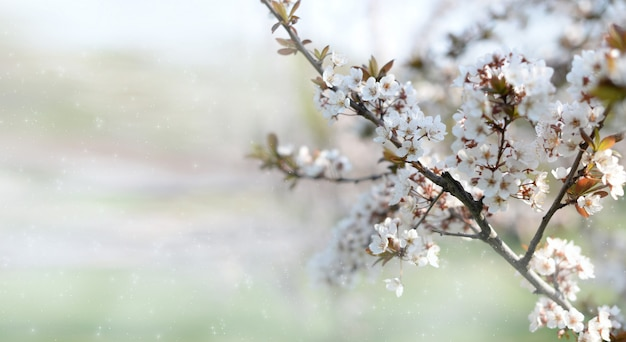 咲く木とバナーの背景 Premium写真