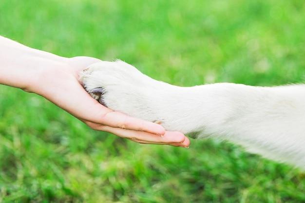 犬とのハンドシェイク。犬の足は女性の手にある。公園のオーナーと犬 Premium写真