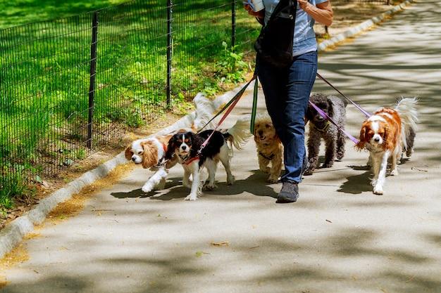 道路を歩いている犬がいる Premium写真