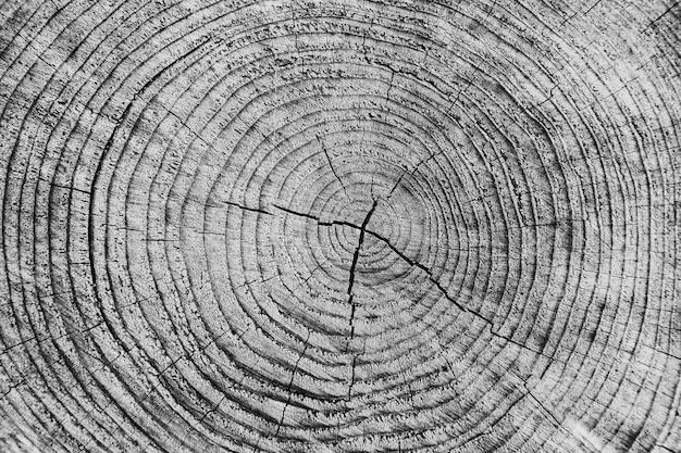 カット木の木目 Premium写真