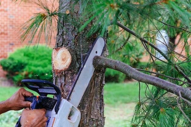 プロはチェーンソーを使って木を切る Premium写真