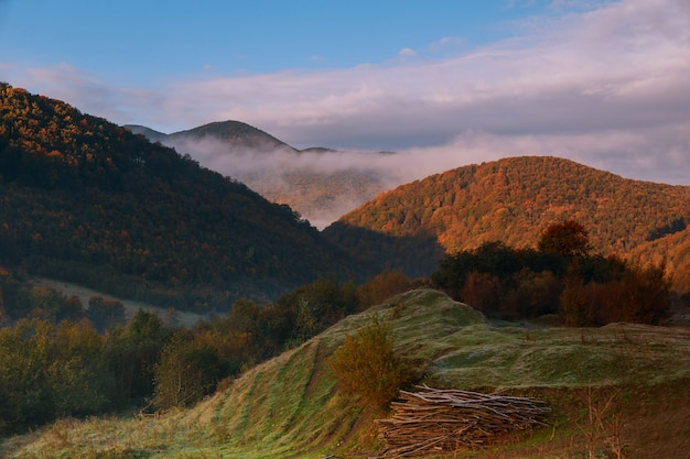 森林森林上の山霧朝の霧 Premium写真
