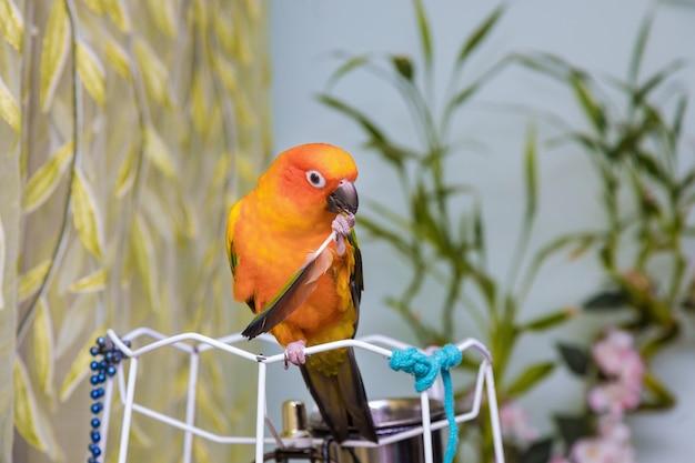 Желтый попугай держит перо Premium Фотографии