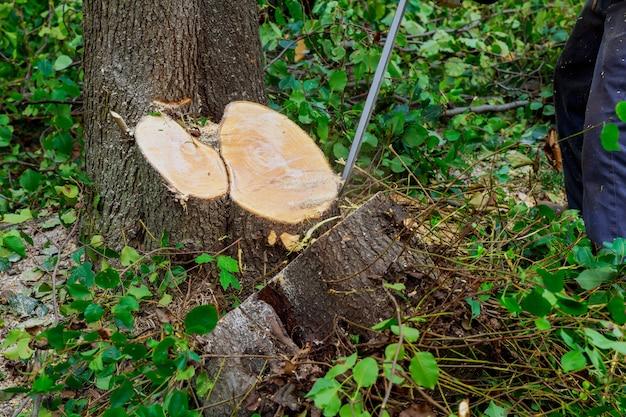男は、チェーンソー、森林破壊の概念と木を切る。 Premium写真