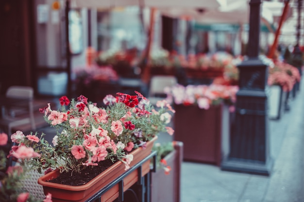 Цветы в корзине на улице. Premium Фотографии