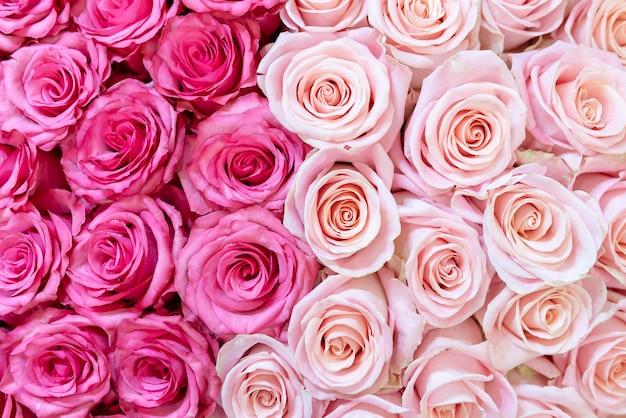 ピンクとクリーム色のバラの背景。 Premium写真