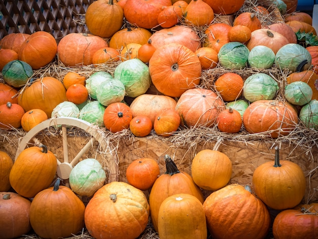 多くの大きなオレンジ色のカボチャがわらにうそをつきます。カボチャの秋の収穫は休日のために準備しました。 Premium写真