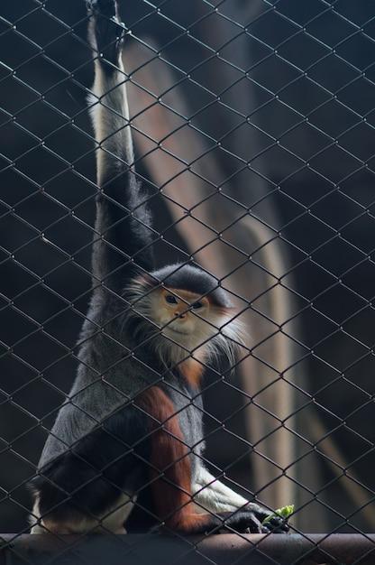 ケージに座っているサル。タイの全国動物園。 Premium写真