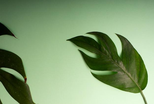 熱帯のヤシの葉春 Premium写真
