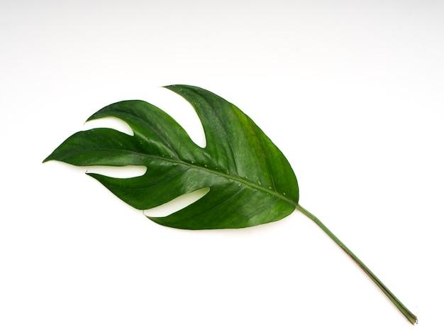 Тропические пальмовые листья весной Premium Фотографии
