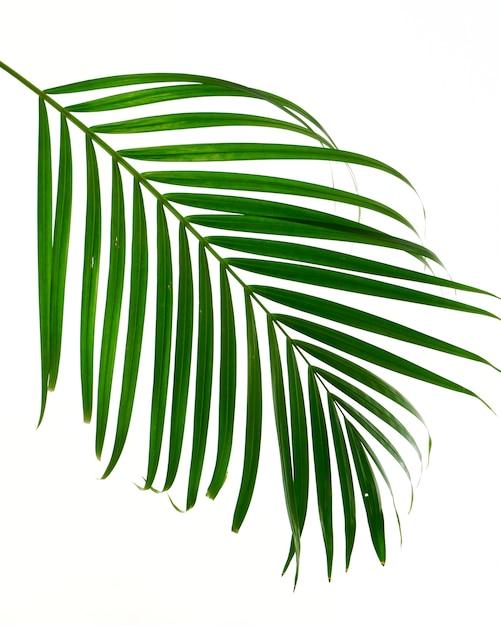 пальмовый листок картинка отправиться изучение своим