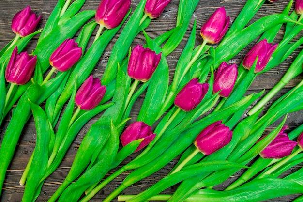 黒の背景に花の濃いピンクのチューリップ。 Premium写真