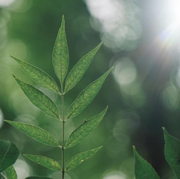 自然の中で秋にテクスチャの緑の木の葉 Premium写真