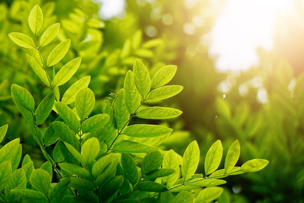 自然、緑の背景に秋のテクスチャの緑の木の葉 Premium写真