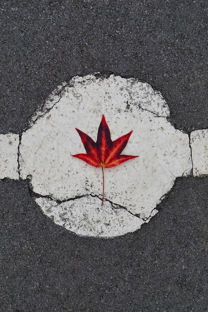 自然、秋の色の秋に赤い木の葉 Premium写真