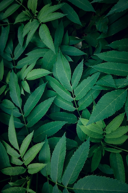 自然、緑の背景にテクスチャの緑の植物の葉 Premium写真