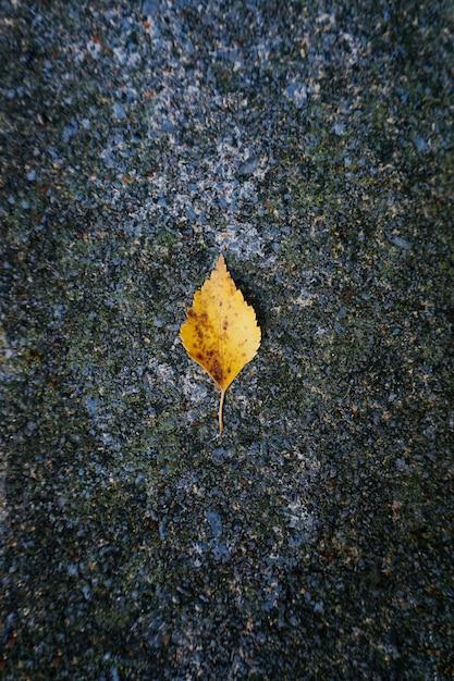 自然、秋の色の秋に黄色の木の葉 Premium写真