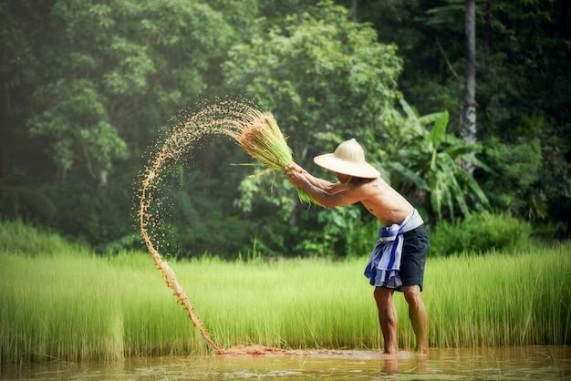 農民タイ人男性農民農民農業農業で手に持っている赤ん坊を襲う Premium写真