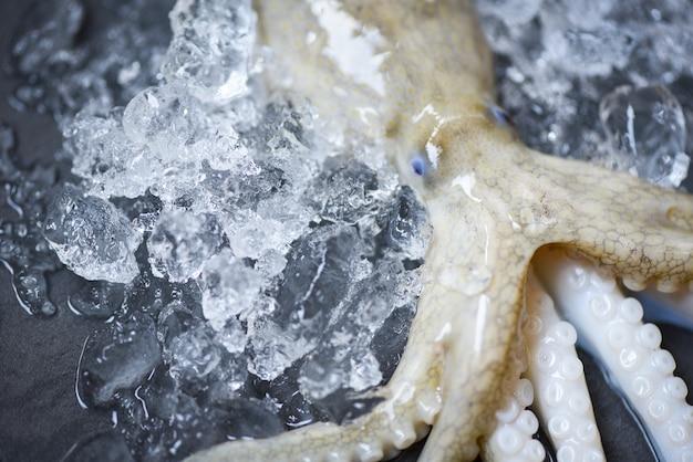 新鮮なタコオーシャングルメ生イカの氷の暗い背景 Premium写真