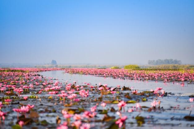 ウドンタニタイの朝のランドマークの水自然風景に赤い蓮ユリフィールドピンクの花と湖川 Premium写真