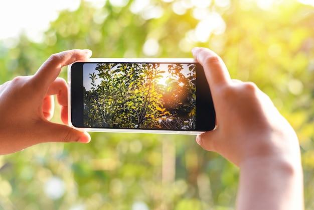 自然の緑の木と夕日のボケ背景の写真を撮るスマートフォンを持つ女性の手/携帯電話の写真とビデオ Premium写真