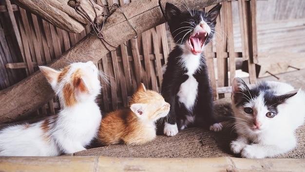 Группа котят, играющих в загородном доме - симпатичные маленькие кошки многоцветные, лежа на полу Premium Фотографии