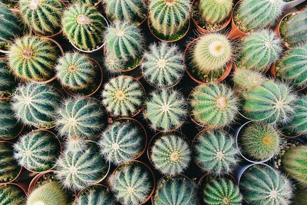 庭に飾るミニチュアサボテンポット Premium写真