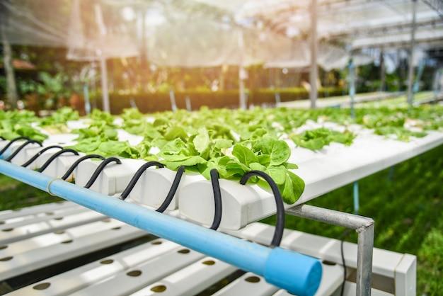 水耕栽培システム若い野菜と新鮮なグリーンバターレタスのサラダ栽培庭の水耕栽培農場の植物 Premium写真