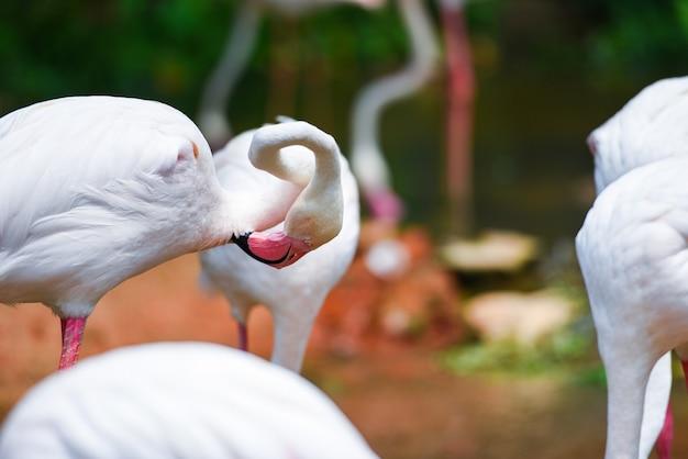 Фламинго птица розовый красивый у озера река природа тропические животные - большой фламинго Premium Фотографии