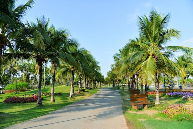 ヤシの木と青い空とヤシの木と公園の経路で春の花 Premium写真
