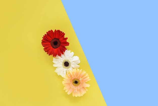 Гербера весенние цветы свежие на цветочной рамке композиция тропическое растение Premium Фотографии