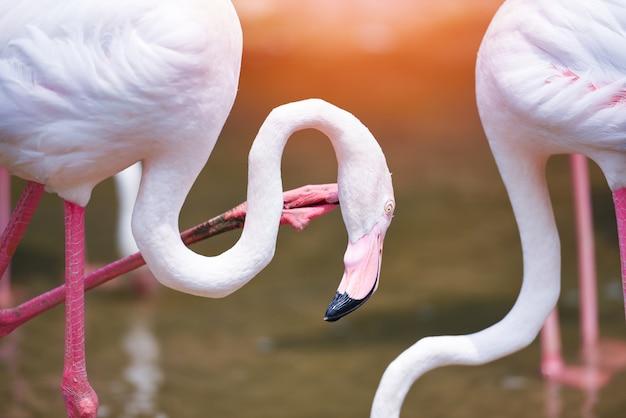 Фламинго птица розовый красивый у озера река природа Premium Фотографии